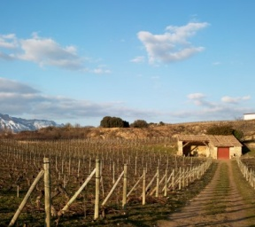 El Pisón Vineyard in winter